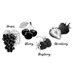 set fruits and berries isolated on white vector image