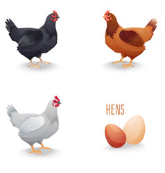 set hens different breed with eggs isolated vector image
