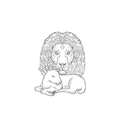 lion watching over sleeping lamb drawing vector image vector image
