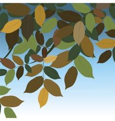 Walnut tree leaves vector