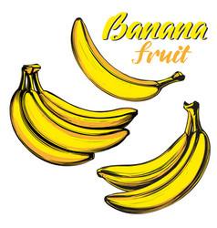 bananas fruit set hand drawn vector image
