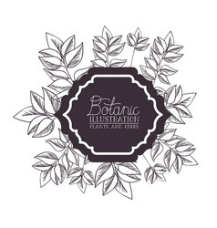Botanic label with plants and herbs vector