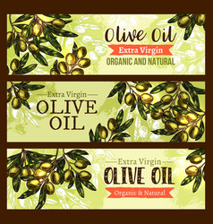 olive oil product olives sketch banners vector image