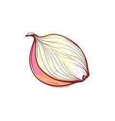 ripe onion half isolated icon vector image