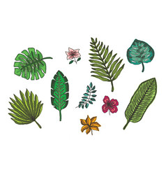 set of bright colorful tropical leaves and flowers vector image