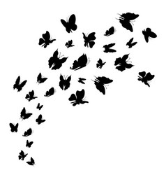 Silhouette black fly flock of butterflies vector