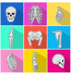 Skelet Icons Types of Bones on Bright Background vector
