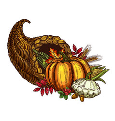 Thanksgiving day cornucopia sketch harvest vector
