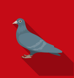 pigeon icon in flate style isolated on white vector image
