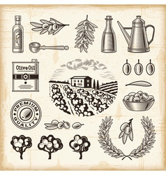 Vintage olive harvest set vector