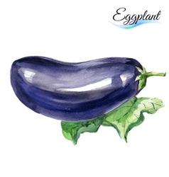 Watercolor eggplant vector image