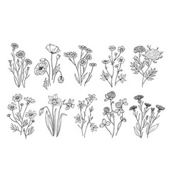 wild flowers sketch wildflowers and herbs nature vector image