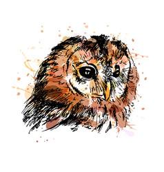 colored hand sketch owl head vector image