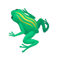 Bright green frog with yellow stripes on back vector