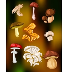 Colorful set of mushrooms and fungi vector image