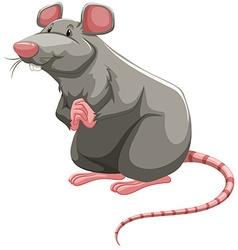 Grey rat vector