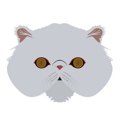 Isolated persian cat vector