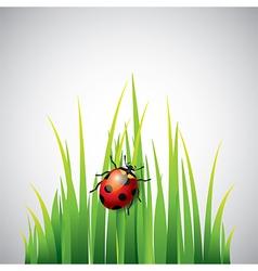 Ladybug grass vector