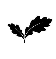 Oak leaves vector