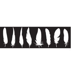 ser of detailed feather silhouettes laconic and vector image