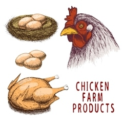 set chicken farm products vector image