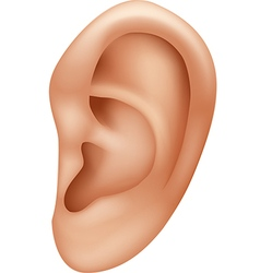 Cartoon of ear human isolated vector image vector image