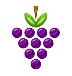 Bunch of grapes fruit food healthy snack vector