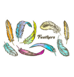 Color different feathers set ink vector