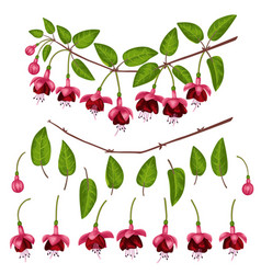 Fuchsia elements set vector