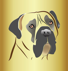 Mastiff dog head on gold background vector