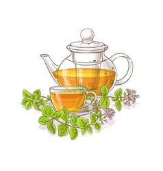 oregano tea vector image