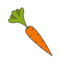 Ripe carrot with leaves flat icon vector