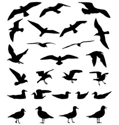 gulls silhouette vector image