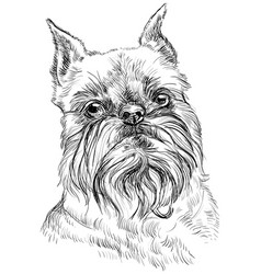 brussels griffon dog portrait vector image