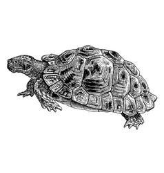 Common tortoise engraving vintage vector