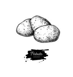 Potato drawing Isolated potatoes heap vector image