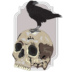 Black raven sitting on skull vector