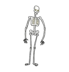 comic cartoon spooky skeleton vector image