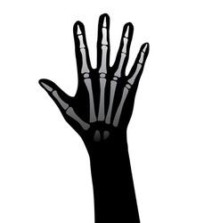 hand xray vector image