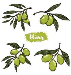 set of olive branch design elements for poster vector image vector image