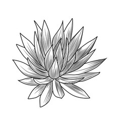 Hand drawn blue agave isolated on white vector