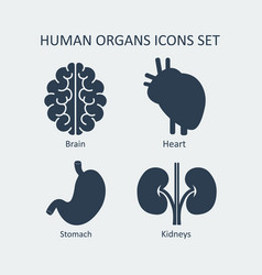 human organs icons set vector image