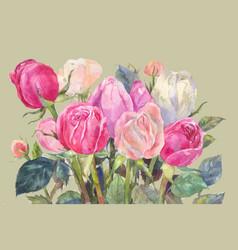 pink roses watercolor vector image