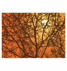 branches sundown vector image