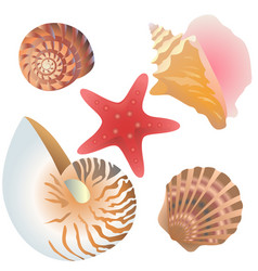 Collection drawn shells and starfish vector