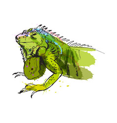 Colored hand sketch of iguana vector