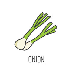 Onion line cooking isolated vector