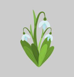spring flowers snowdrops sketch vector image