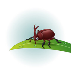 Cartoon rhino beetle on leaf vector