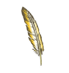 Color decorative bird flying element feather vector